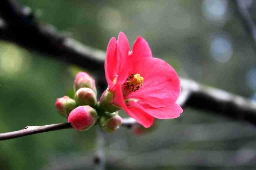 Pink Flwr CU 3699