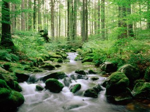 forest-stream-beautiful-picture-wide-new-desktop-wallpapers-in-hd